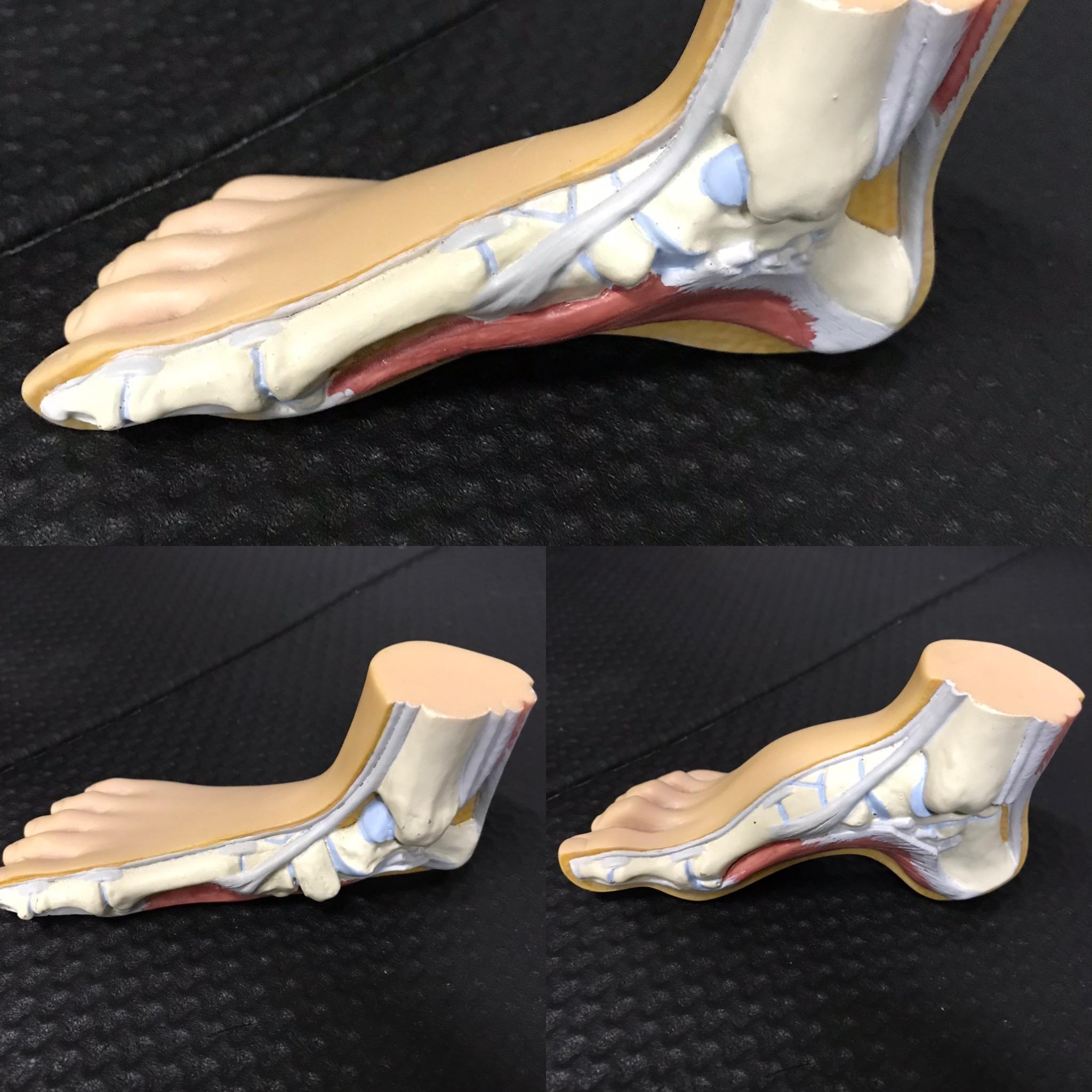 理想的な足の形