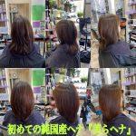 純国産ヘナ『美らヘナ』、暗過ぎずに髪質改善